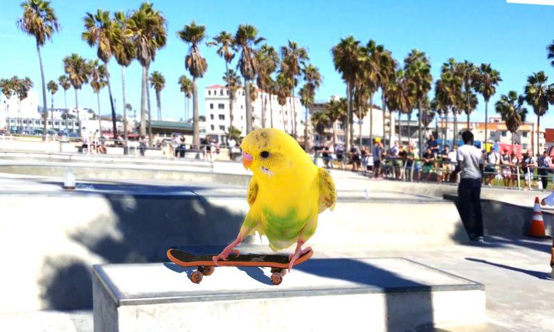 Papużka falista - wierny przyjaciel ?